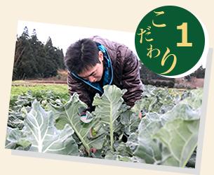 安心、安全にむけた無農薬、自家栽培