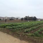 本日の七番館農場
